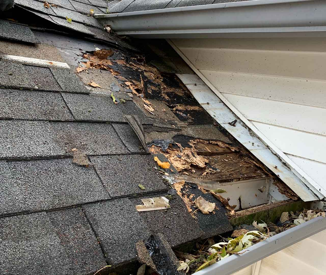 missing shingle roofs